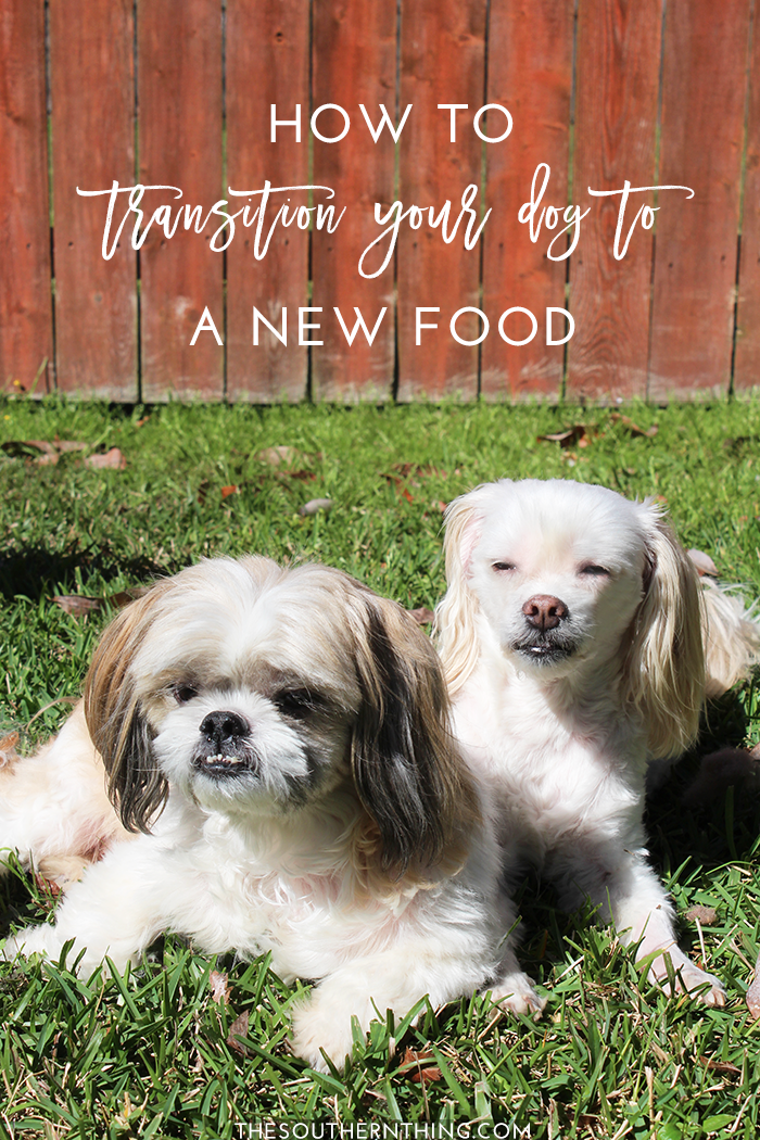 How to Transition Your Dog to a New Food | How to Switch Dog Food