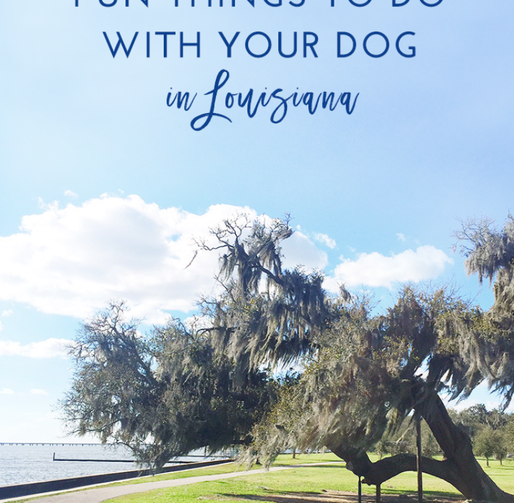 Fun Things to Do With Your Dog in Louisiana