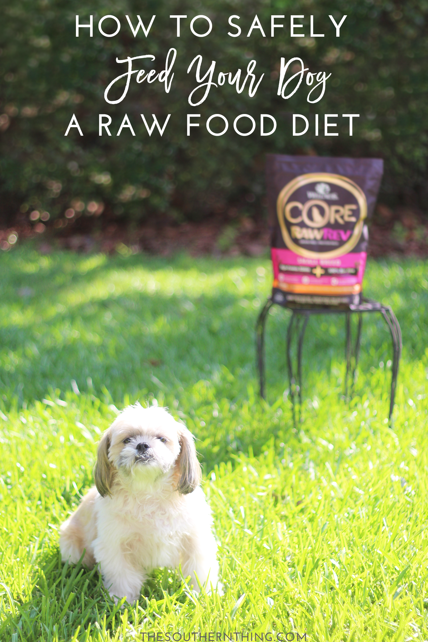 How to Safely Feed Your Dog a Raw Dog Food Diet + Pros ands Cons of a Raw Diet