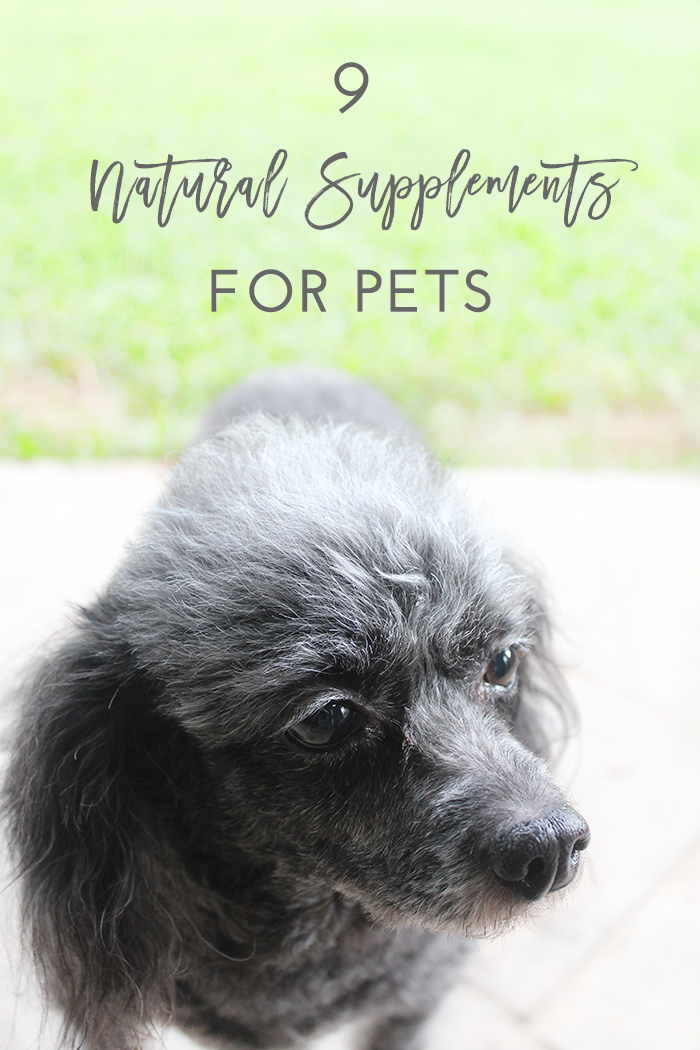9 Natural Supplements for Pets