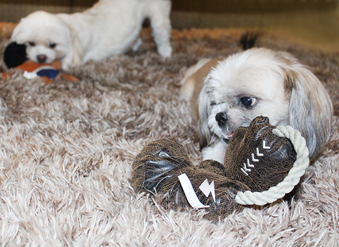 The Best Way to Keep Your Dog Occupied at Home