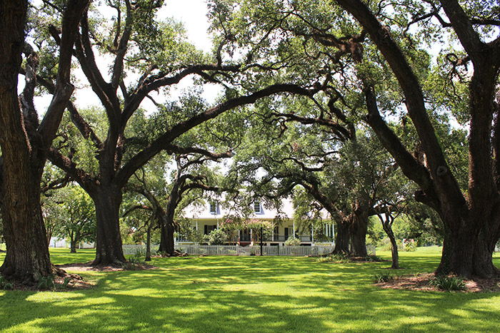 Oakland Plantation Natchitoches, LA - The Ultimate Natchitoches Travel Guide: Where to Eat, Stay, & Play